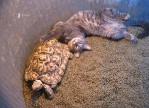 Sophomore Alena Porter describes life with a tortoise as a pet