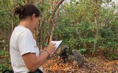 Upper School science teacher Andrea Bailey studied baboons in Africa