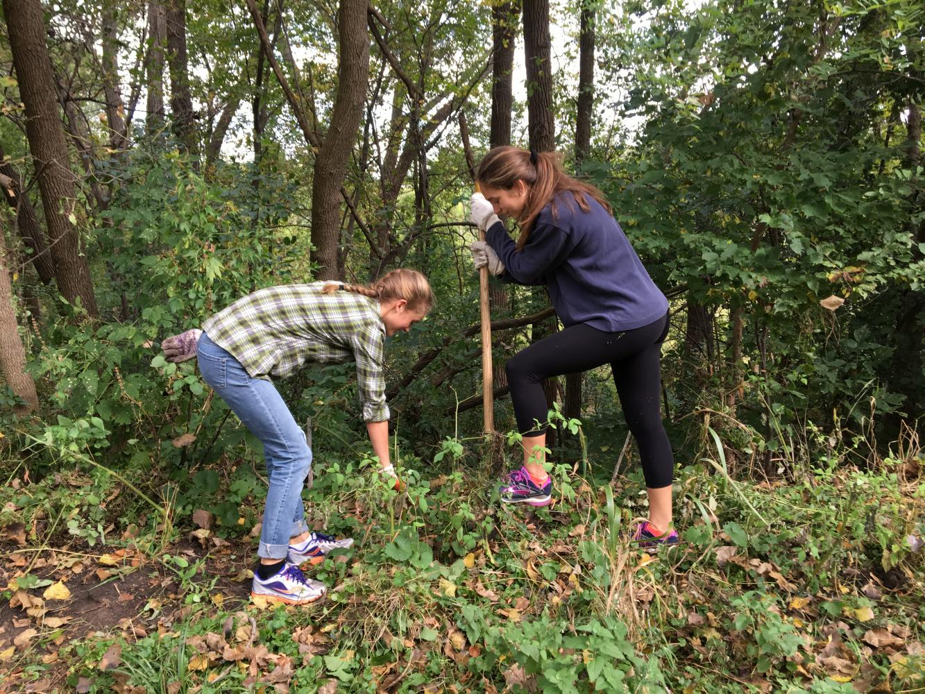 Seniors Flannery Enneking-Norton and Emilia Hoppe work to dig up invasive species, such as weeds.