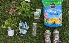Preserve summer flavors with DIY mason jar garden