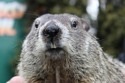 Groundhog forecasts 6 more weeks of winter; students dubious