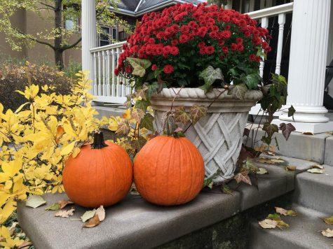 QUIZ: Personalized Halloween Weekend