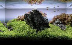 Lam turns interest in aquatic plants into unique hobby