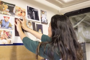 "Senior Class Leadership Council member Emma Chang puts up a senior's baby picture on the wall of the senior lounge. ""The reason why we have the baby pictures is to show yourself from when you are really little, and once you give your speech, it shows the change,"" Chang said."
