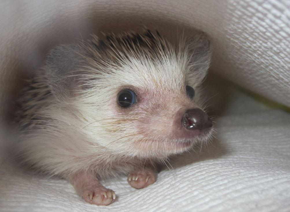 A lot of people have dogs and cats, [having a hedgehog] is like going to the zoo every day, Kirby said.