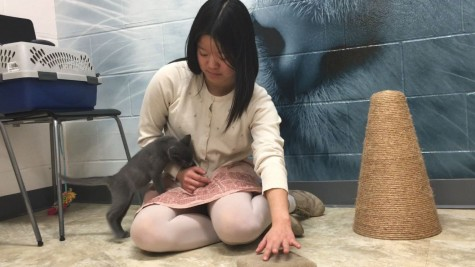 "Senior Jane Jackson plays with her foster cat at the Animal Humane Society. ""Recently I totally failed at being a foster because I adopted one of [them]. That's the hardest part; not wanting to adopt all of these cute animals,"" Jackson said."