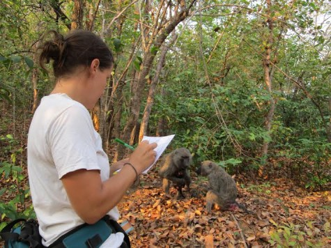 Bailey records observations of two baboons in Tanzania, which she did as she followed them around.