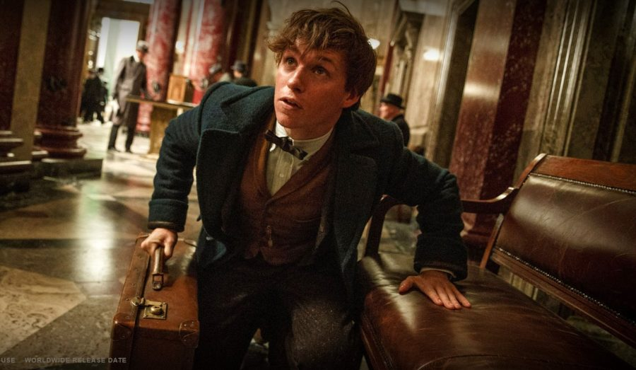 Eddie Redmayne stars as Newt Scamander in Fantastic Beasts and Where to Find Them. Fair Use Image: Warner Bros Pictures