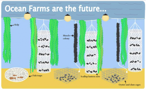 SUSTAINABLE FOOD SOURCING. One of the main advantages of using ocean farms is the ability to source food sustainably. The kelp and shellfish grow naturally with the ocean and do not require any harmful additives to thrive.