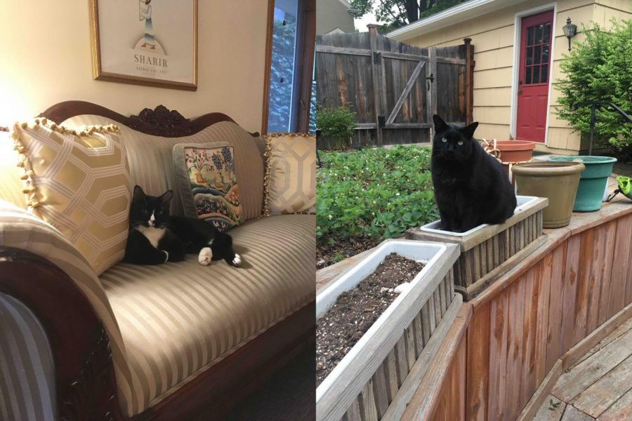 Senior Jenny Sogin's two cats. On the left is Oreo, and on the right is Bandit.