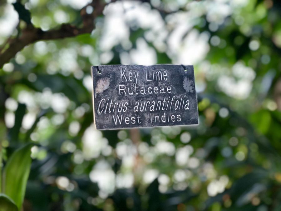 Signs at Como indicate the types of plants. Here, a sign hangs around a key lime tree.