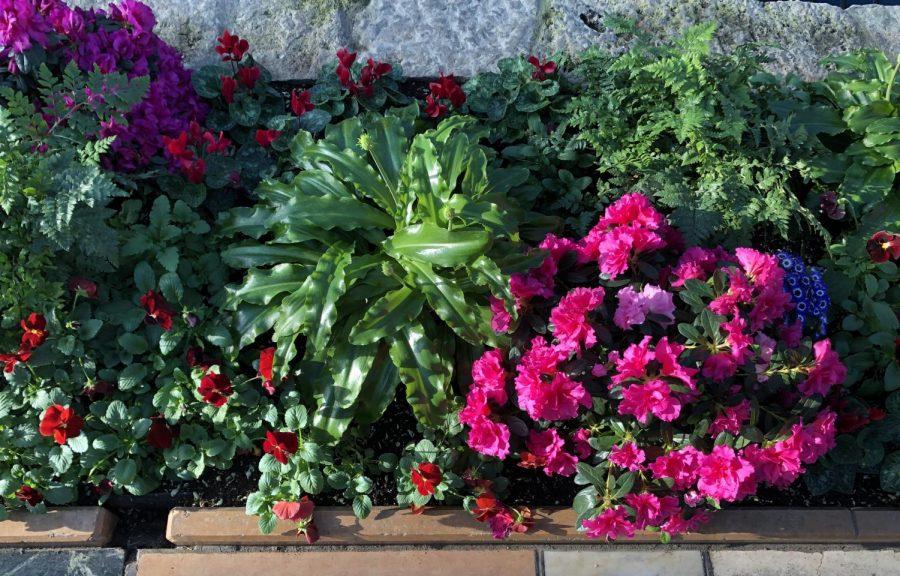 The flowers on display in the Sunken Garden.