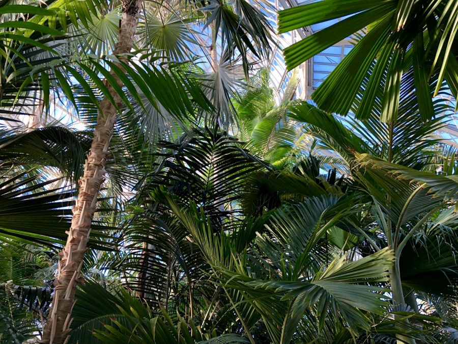 Escape the subzero temperatures and soak up the balmy air at the Como Park Conservatory.