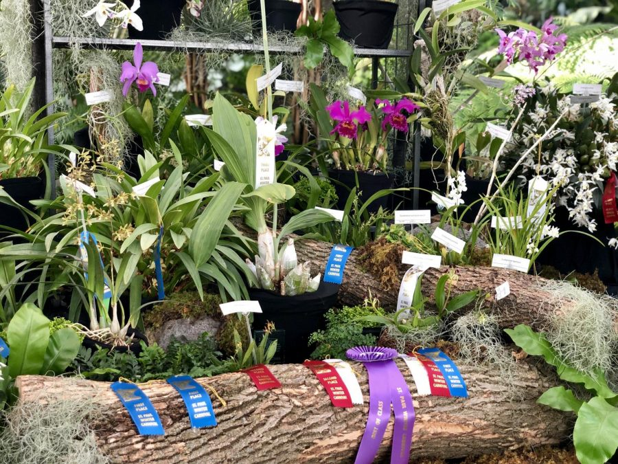 Award winning flowers on display at the Como Park Conservatory.