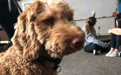 Presence of therapy dog brings excitement to campus