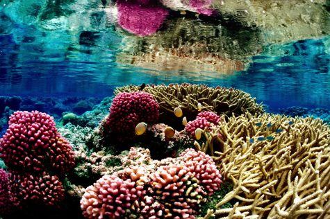 Vivid coral reefs bloom under the sea.