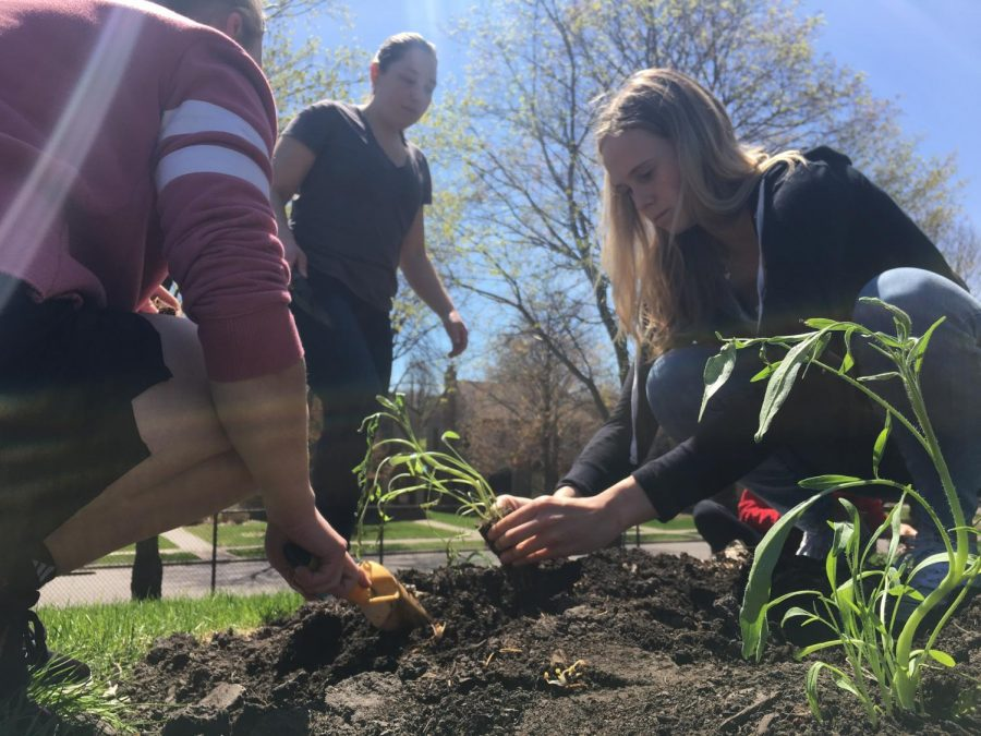 Juniors Sonja Henze plants a plant with the help of another PEP member.