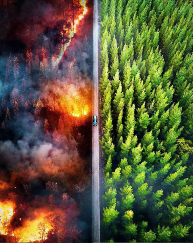 Fires blaze through the Amazon Rain Forest, causing disaster to the habitats within.