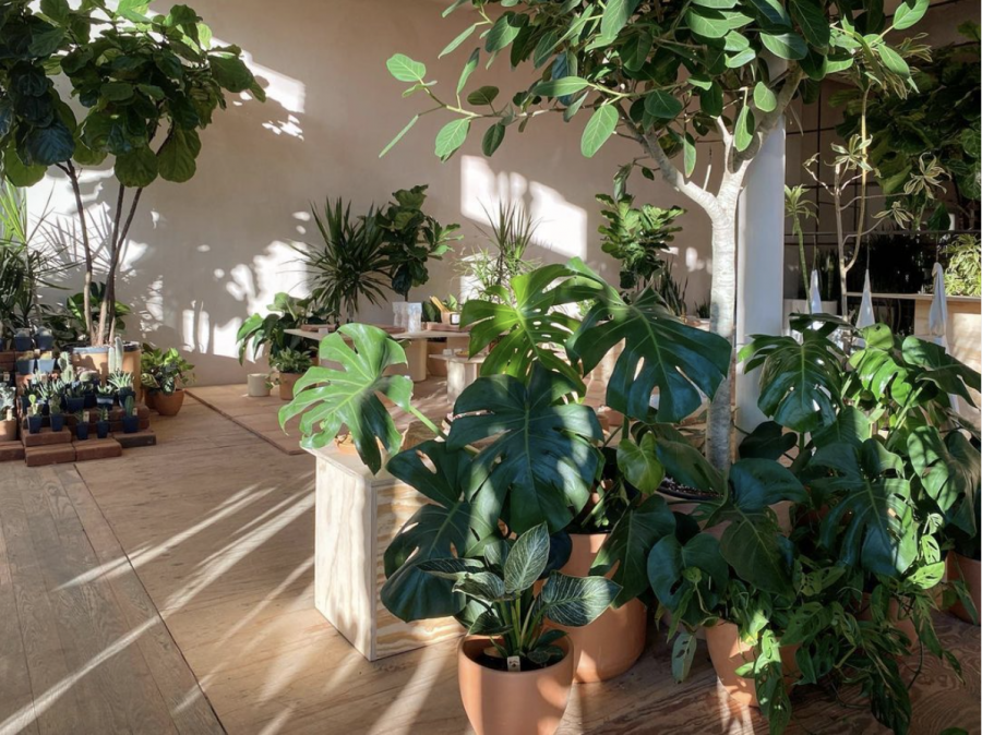 Plants provides a sophisticated shop filled with gorgeous ceramic pots, well-designed merchandise, healthy and rare plants, and an instagramable atmosphere.