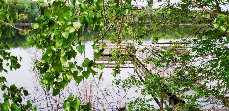 A curtain of ivy covers the view of the pier as if walking into a rainforest.