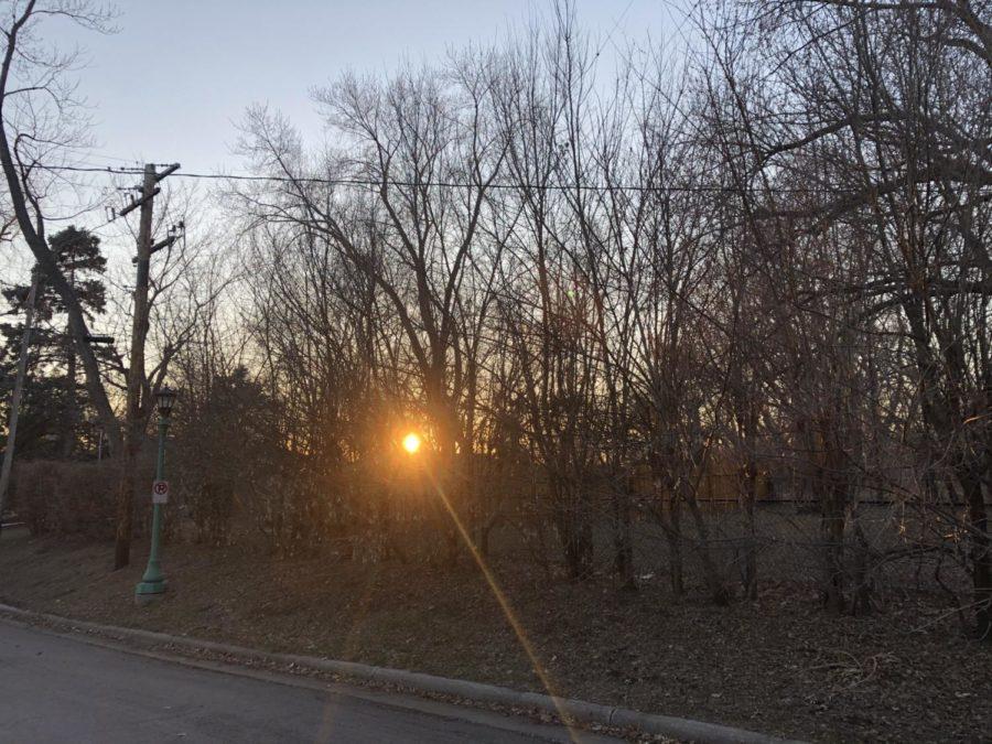 A burning orange light creeps into the twigs.